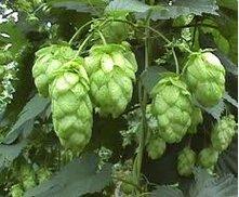 18/05 Echange de plants, houblon et permaculture