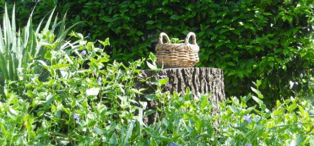dim 14/06 : balade et plantes sauvages