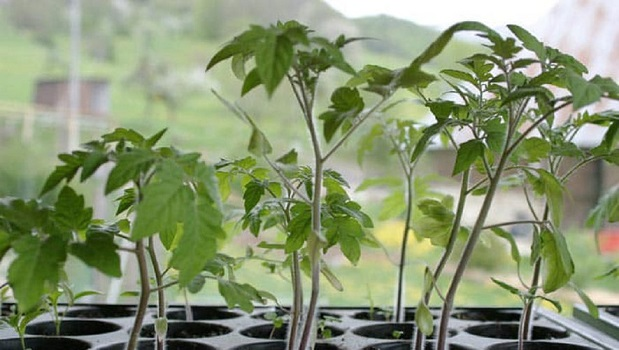 TROC DE PLANTS